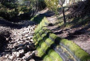 Bank Stabilisation, Bank Erosion Control, Natural Bank Stabilisation, River bank Stabilisation